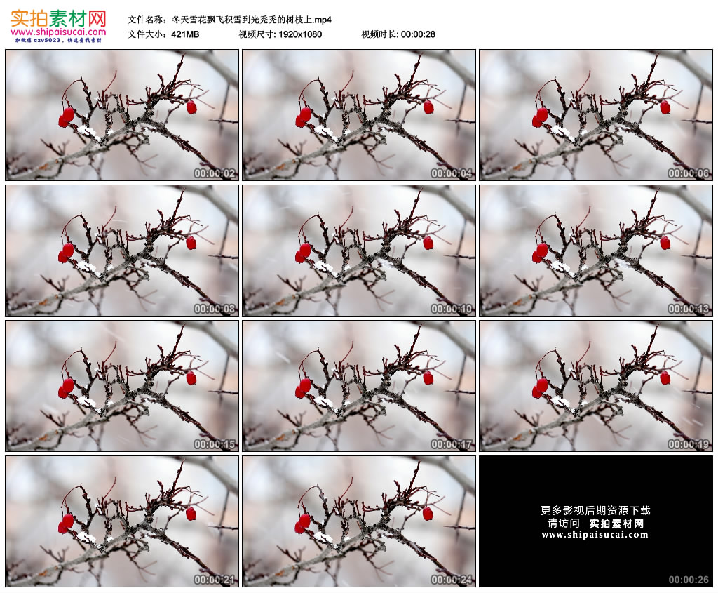 高清实拍视频素材丨冬天雪花飘飞积雪到光秃秃的树枝上 视频素材-第1张