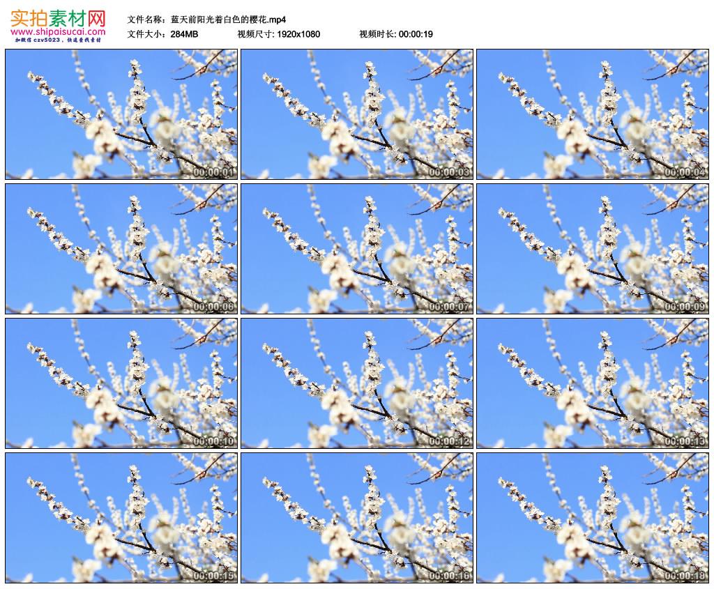 高清实拍视频素材丨蓝天前阳光着白色的樱花 视频素材-第1张