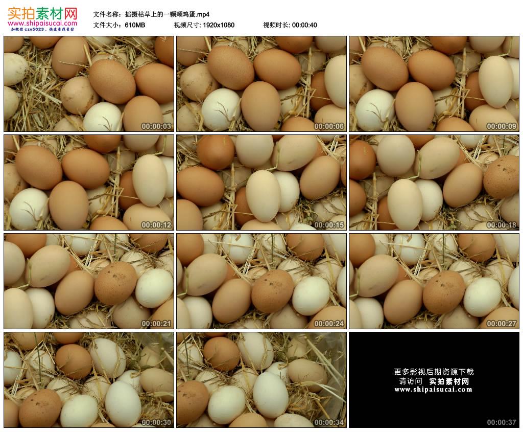 高清实拍视频素材丨摇摄枯草上的一颗颗鸡蛋 视频素材-第1张