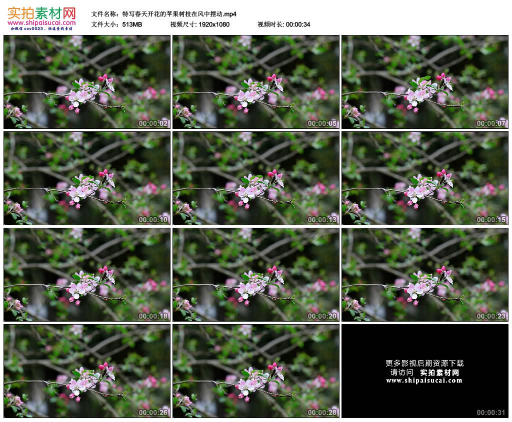 高清实拍视频素材丨特写春天开花的苹果树枝在风中摆动 视频素材-第1张