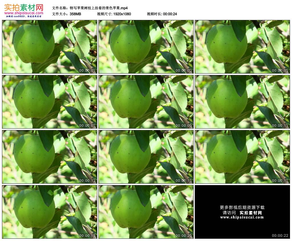 高清实拍视频素材丨特写苹果树枝上挂着的青色苹果 视频素材-第1张