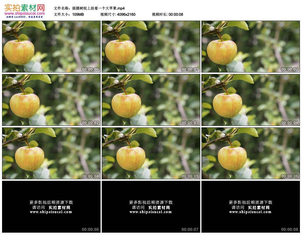 4K实拍视频素材丨摇摄树枝上挂着一个大苹果 4K视频-第1张