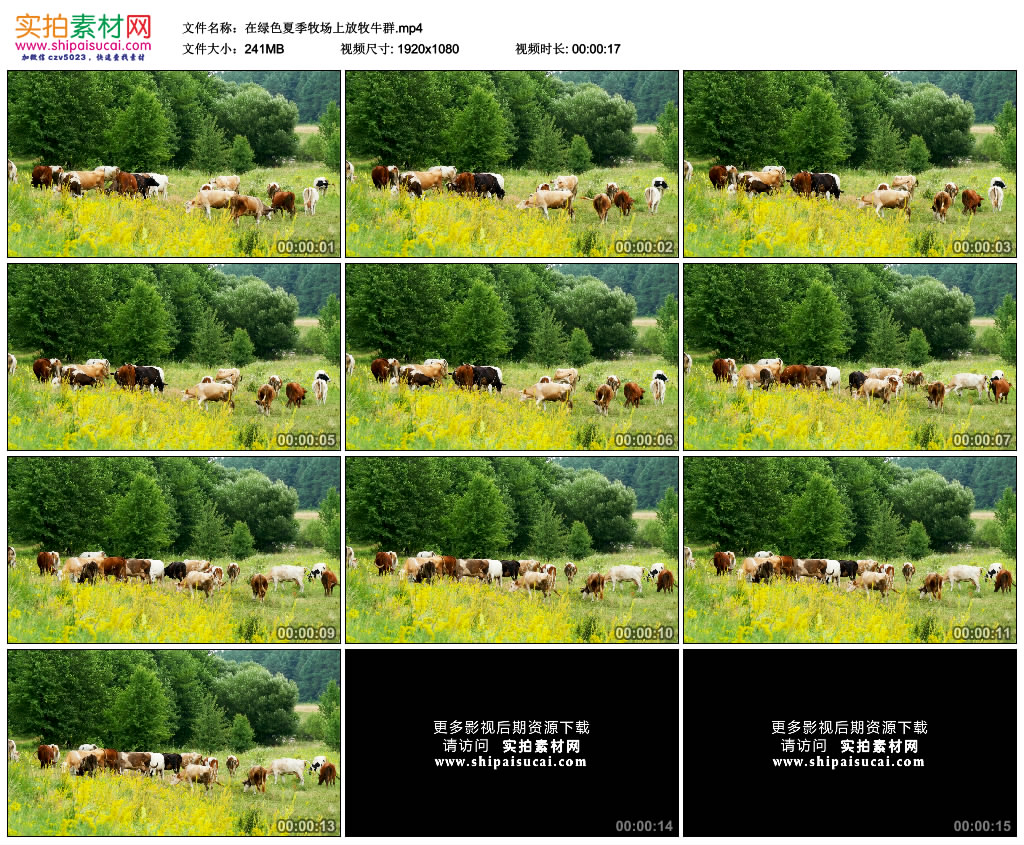 高清实拍视频素材丨在绿色夏季牧场上放牧牛群 视频素材-第1张