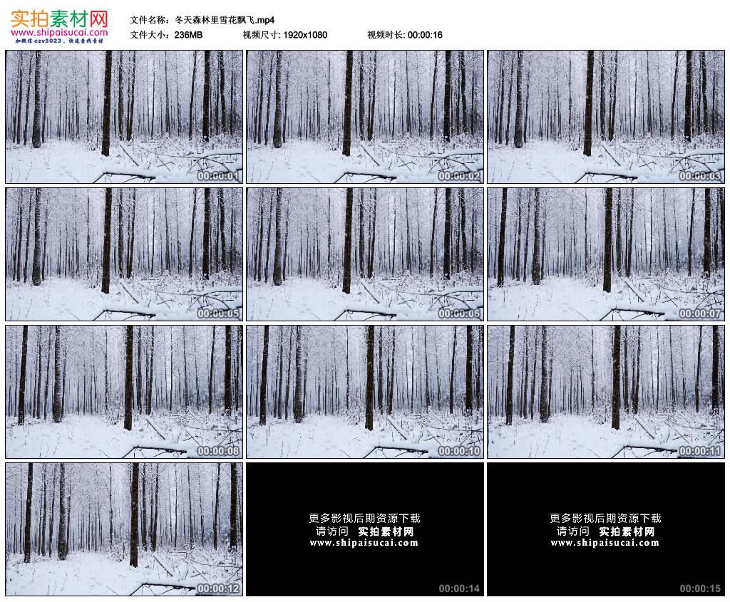 高清实拍视频素材丨冬天森林里雪花飘飞 视频素材-第1张