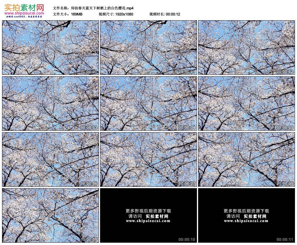 高清实拍视频素材丨仰拍春天蓝天下树梢上的白色樱花 视频素材-第1张