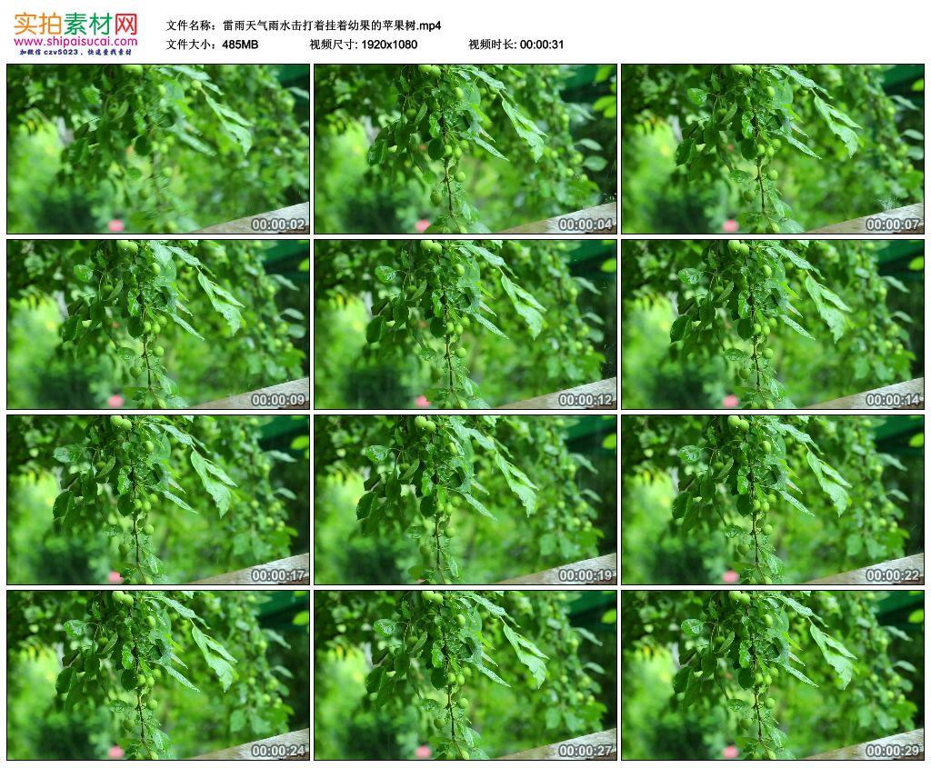高清实拍视频素材丨雷雨天气雨水击打着挂着幼果的苹果树 视频素材-第1张