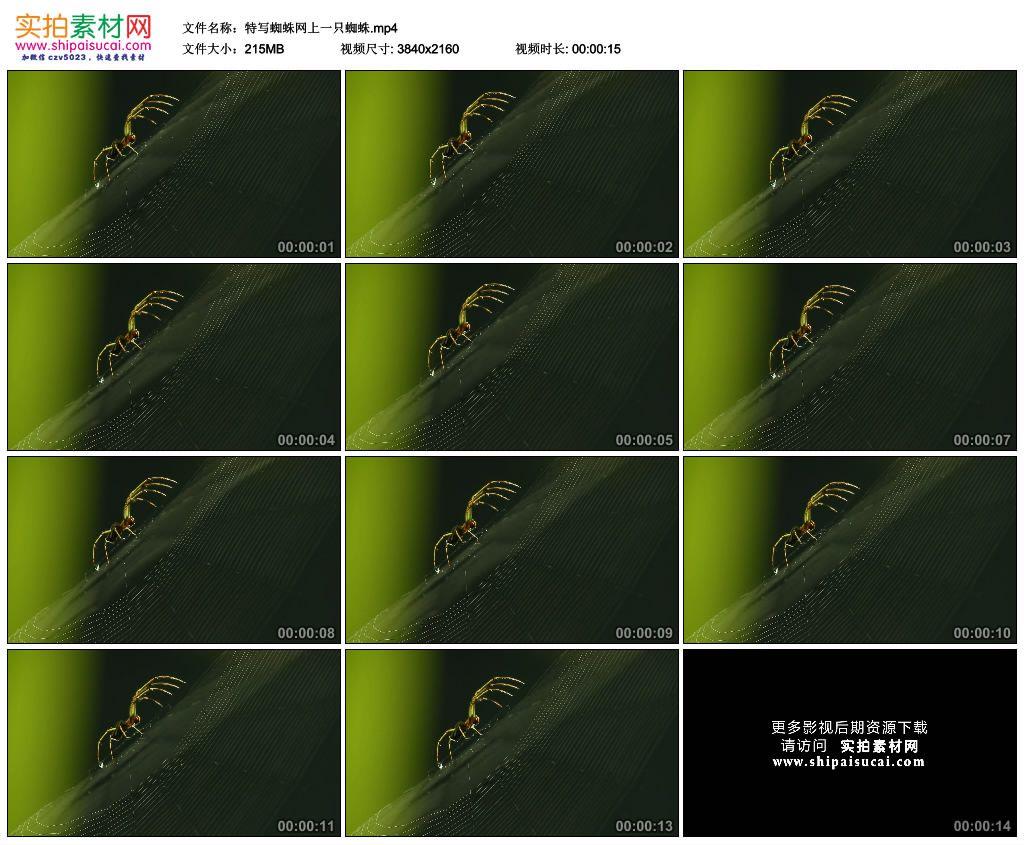 4K实拍视频素材丨特写蜘蛛网上一只蜘蛛 4K视频-第1张