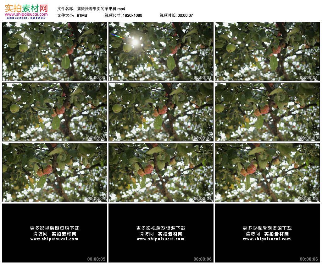 高清实拍视频素材丨摇摄挂着果实的苹果树 视频素材-第1张