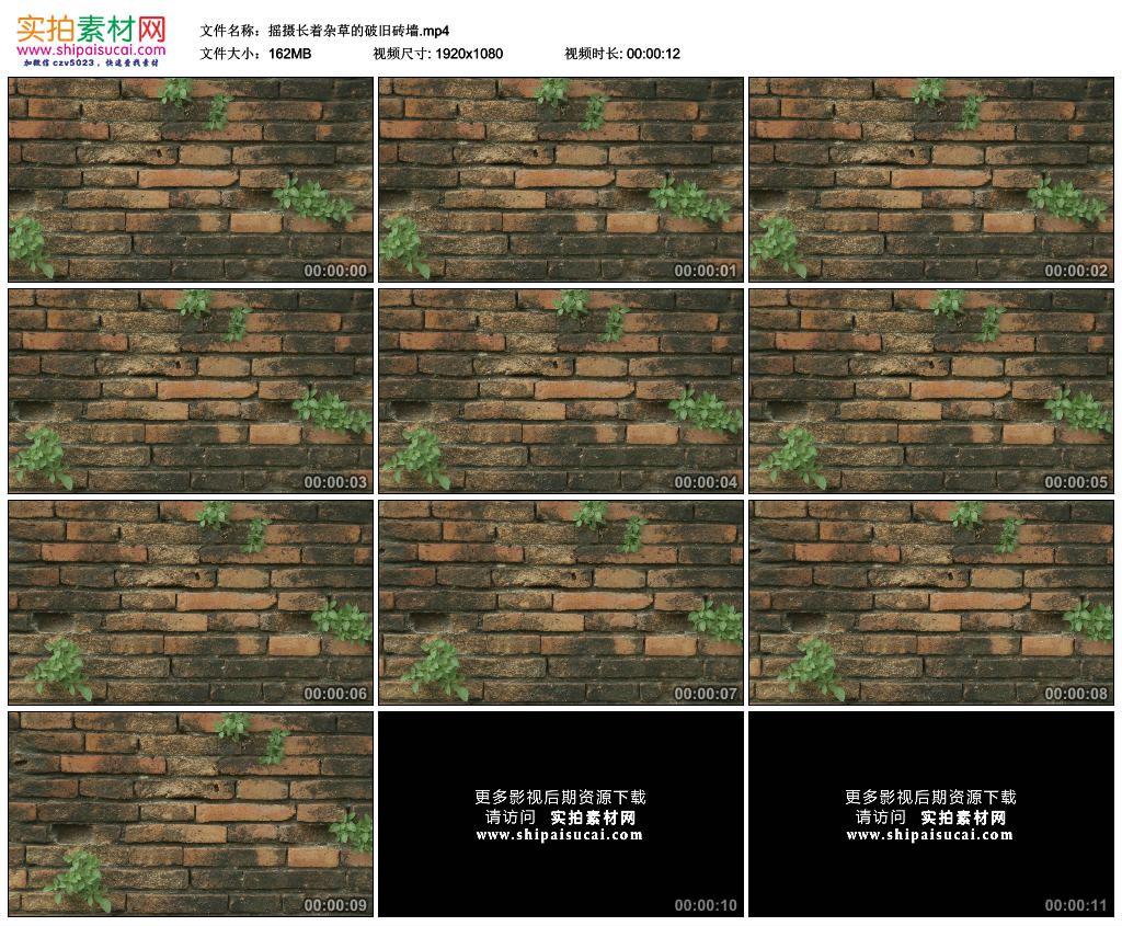 高清实拍视频素材丨摇摄长着杂草的破旧砖墙 视频素材-第1张