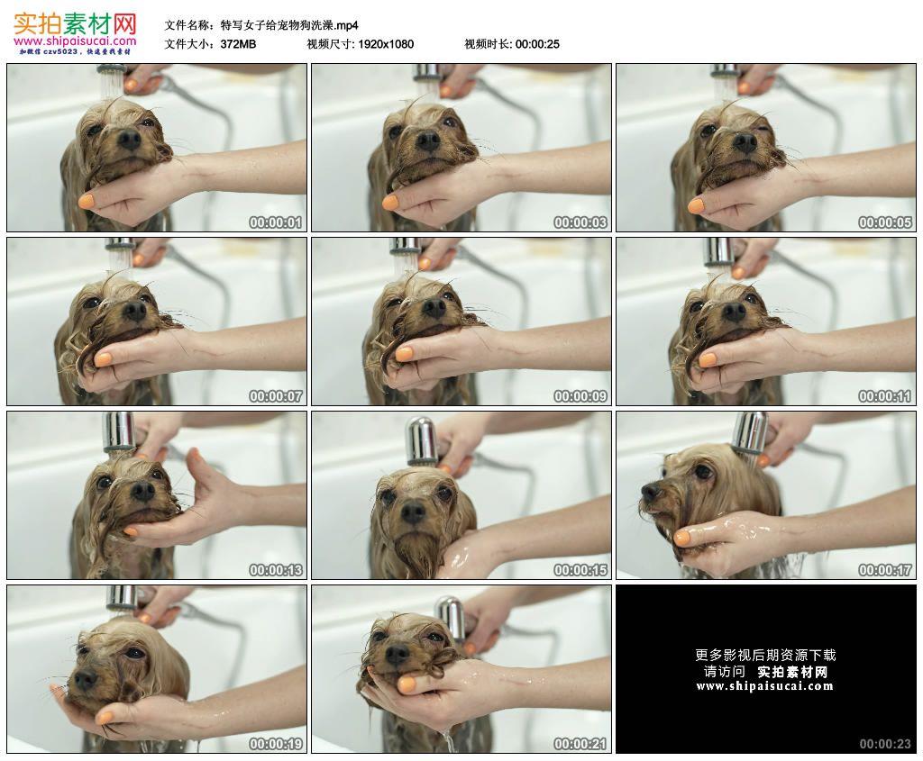 高清实拍视频素材丨特写女子给宠物狗洗澡 视频素材-第1张