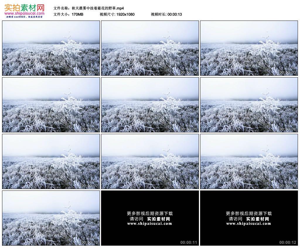 高清实拍视频素材丨秋天晨雾中挂着霜花的野草 视频素材-第1张