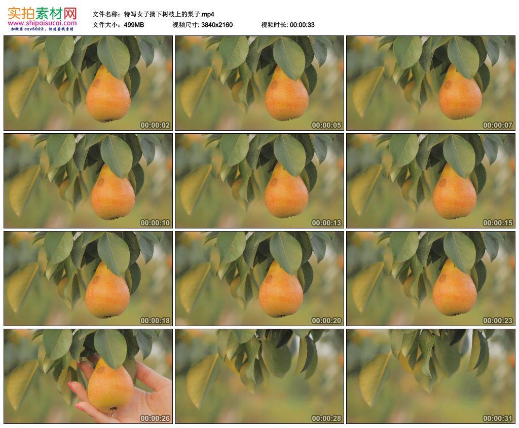 4K实拍视频素材丨特写女子摘下树枝上的梨子 4K视频-第1张