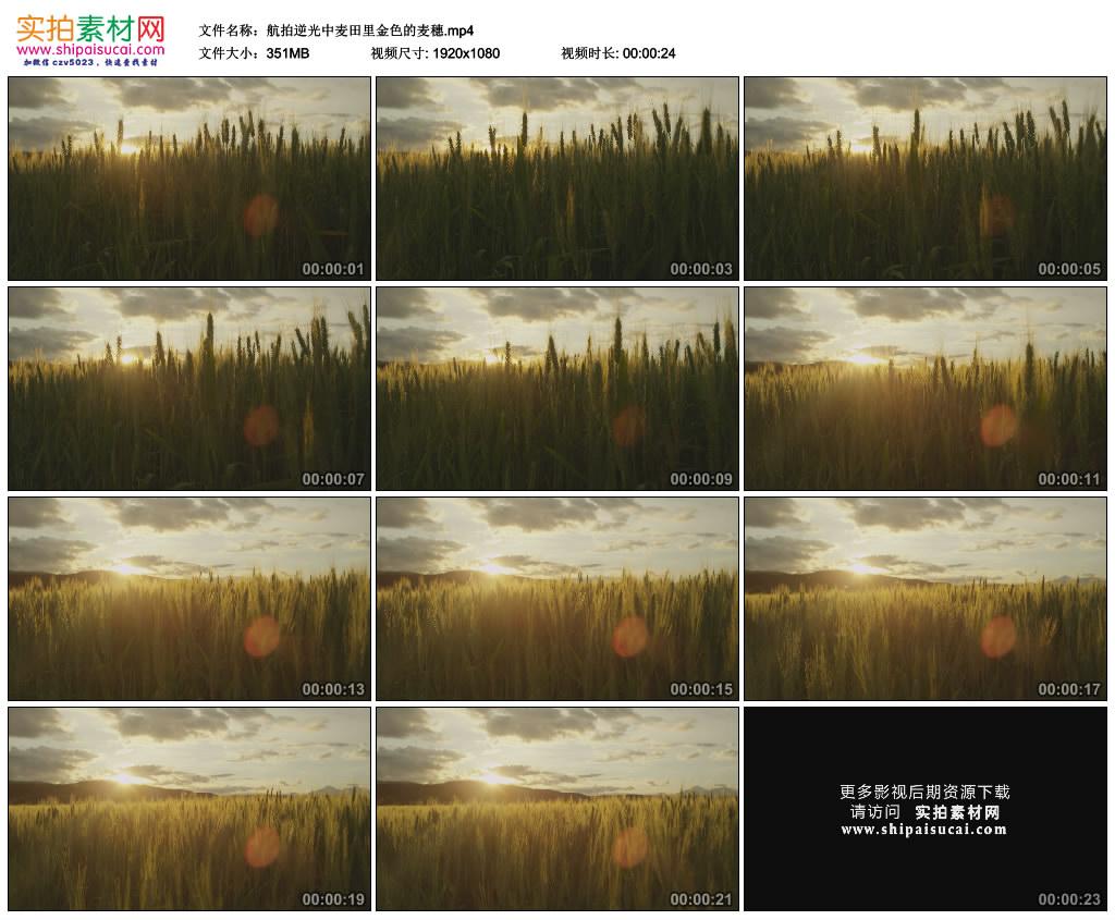 高清实拍视频素材丨航拍逆光中麦田里金色的麦穗 视频素材-第1张