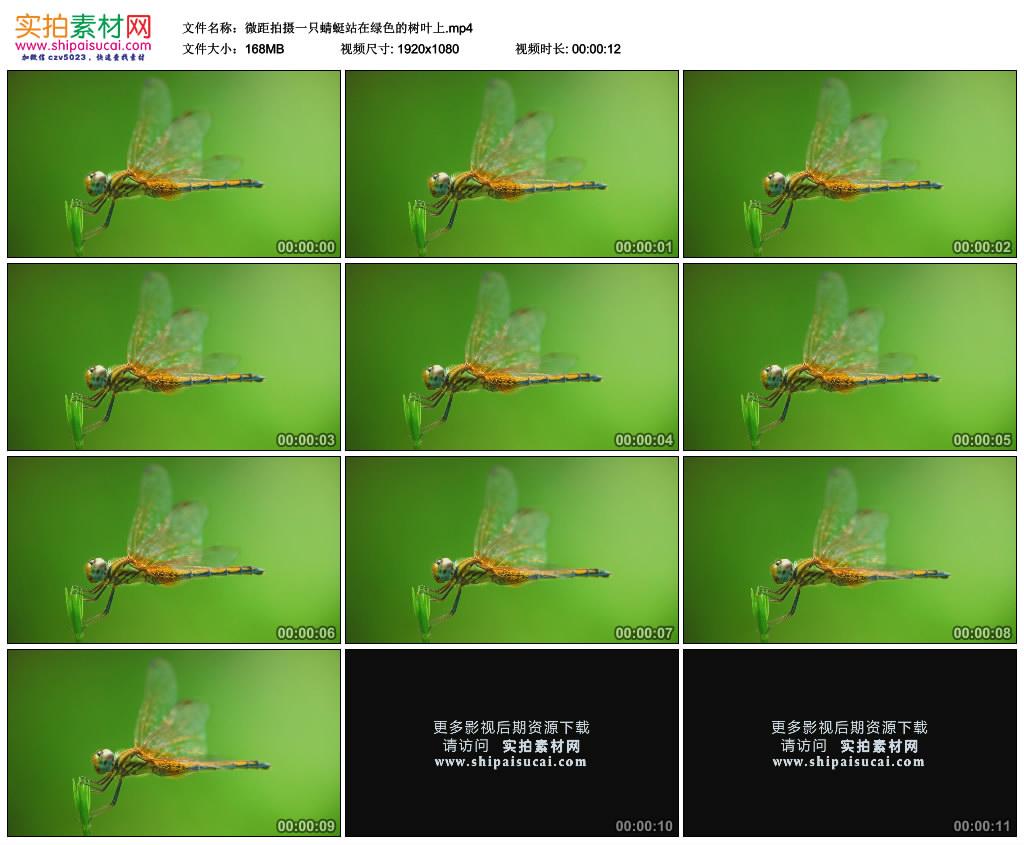 高清实拍视频素材丨微距拍摄一只蜻蜓站在绿色的树叶上 视频素材-第1张