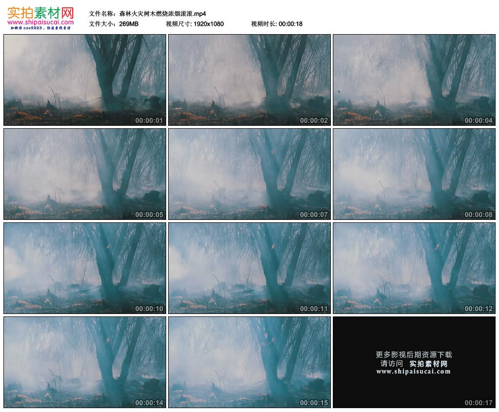 高清实拍视频素材丨森林火灾树木燃烧浓烟滚滚 视频素材-第1张