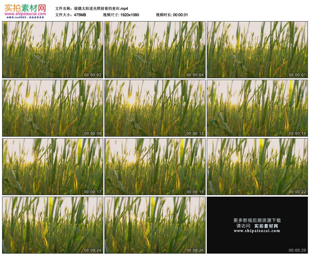 高清实拍视频素材丨摇摄太阳逆光照射着的麦田 视频素材-第1张