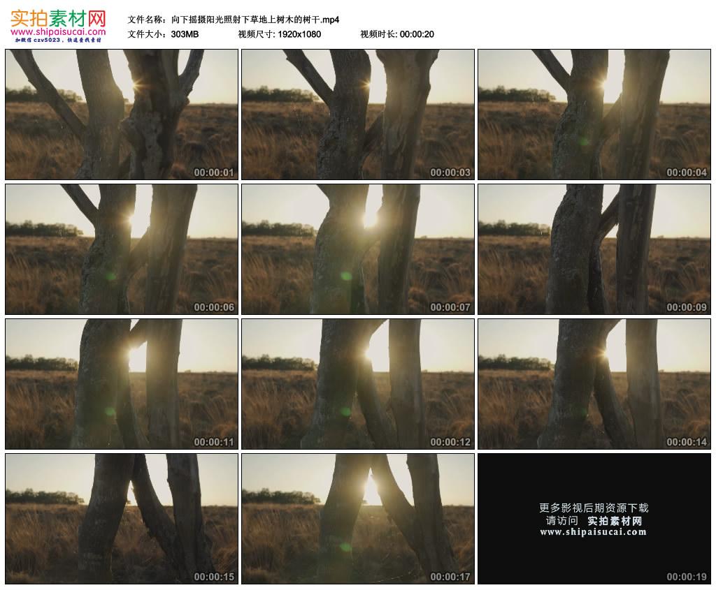 高清实拍视频素材丨向下摇摄阳光照射下草地上树木的树干 视频素材-第1张
