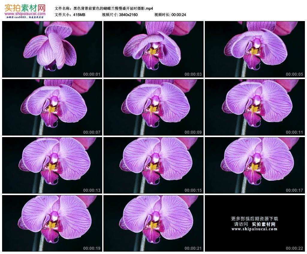 4K实拍视频素材丨黑色背景前紫色的蝴蝶兰慢慢盛开延时摄影 4K视频-第1张