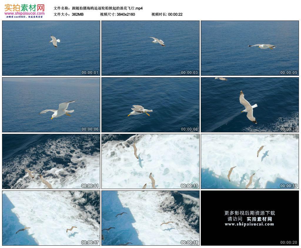 4K实拍视频素材丨跟随拍摄海鸥追逐轮船掀起的浪花飞行 4K视频-第1张