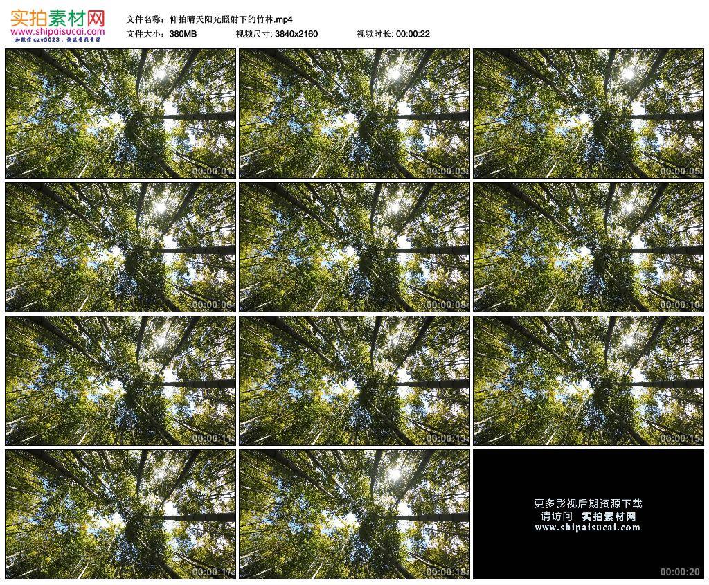 4K实拍视频素材丨仰拍晴天阳光照射下的竹林 4K视频-第1张