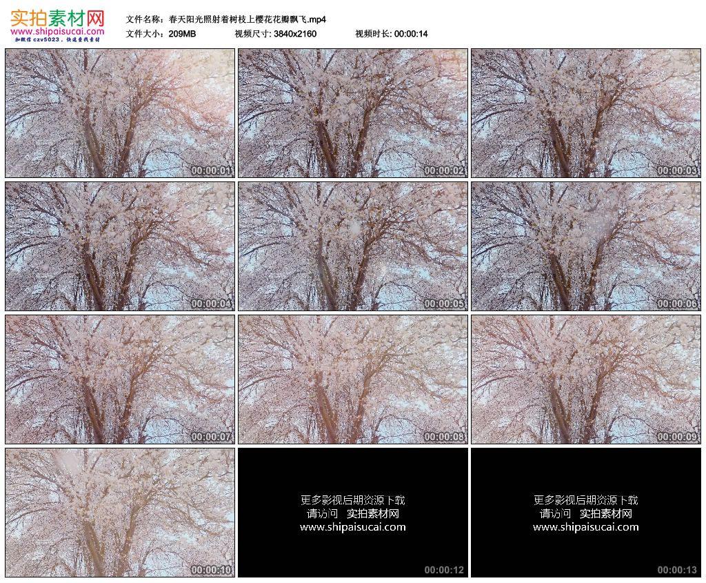 4K实拍视频素材丨春天阳光照射着树枝上樱花花瓣飘飞 4K视频-第1张