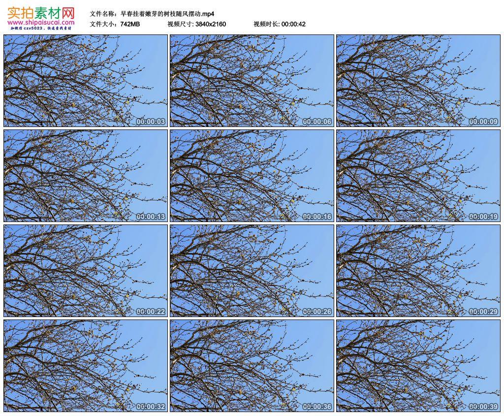 4K实拍视频素材丨早春挂着嫩芽的树枝随风摆动 4K视频-第1张