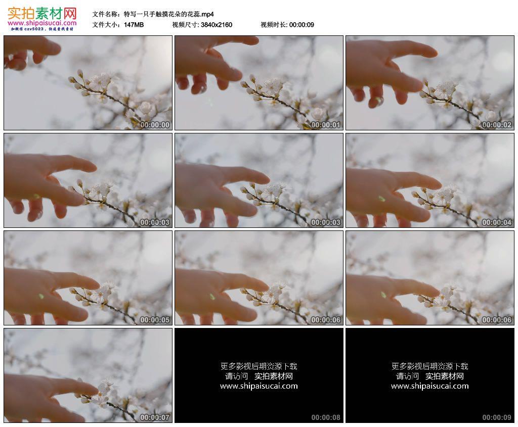 4K实拍视频素材丨特写一只手触摸花朵的花蕊 4K视频-第1张