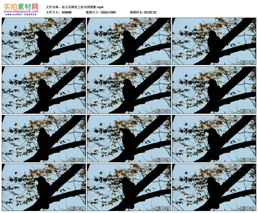 高清实拍视频素材丨站立在树枝上的乌鸦剪影 视频素材-第1张