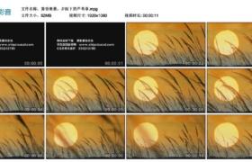 [高清实拍素材]黄昏美景,夕阳下的芦苇草