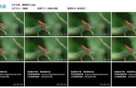 【高清实拍素材】蜻蜓特写