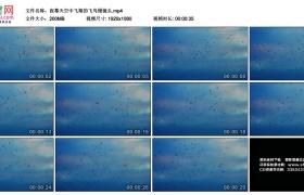 高清实拍视频丨夜幕天空中飞翔的飞鸟慢镜头