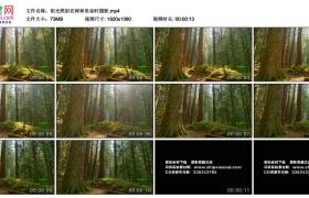高清实拍视频素材丨阳光照射在树林里延时摄影