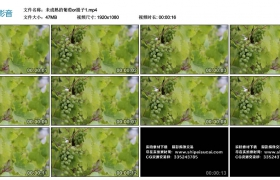 高清实拍视频素材丨未成熟的葡萄or提子1