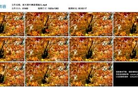 高清实拍视频丨秋天黄叶飘落慢镜头