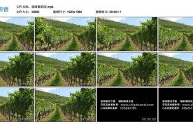 高清实拍视频素材丨摇摄葡萄园