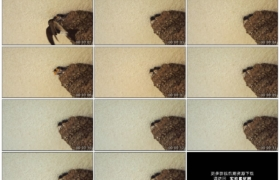 4K实拍视频素材丨春天燕子妈妈觅食喂养巣中的乳燕