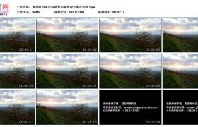 高清实拍视频丨黄昏时的落日和前景的草地和开满花的树