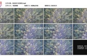 4K实拍视频素材丨航拍秋天的树林