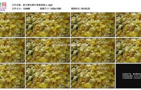 高清实拍视频素材丨秋天黄色树叶掉落到地上