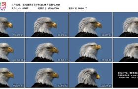 高清实拍视频素材丨蓝天背景前灵动的白头鹰肖像特写