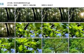【高清实拍素材】阳光穿过森林树枝发芽