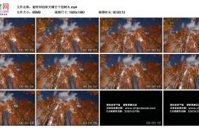 高清实拍视频素材丨旋转仰拍秋天晴空下的树木