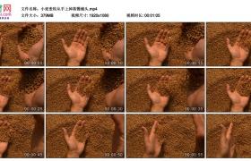 高清实拍视频丨小麦麦粒从手上掉落慢镜头