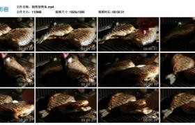 高清实拍视频丨烧烤架烤鱼