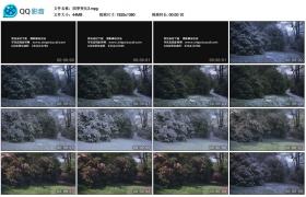 [高清实拍素材]四季变化3
