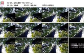 高清实拍视频丨旋转拍摄森林中的参天大树