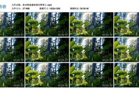 高清实拍视频丨阳光照进森林落在野草上