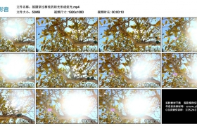 高清实拍视频丨摇摄穿过树枝的阳光形成炫光