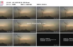 高清实拍视频素材丨山坡上浓雾中静立着一颗小树