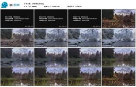 [高清实拍素材]四季变化2